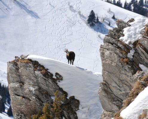 Ski alpin Yves Degravel Organisation